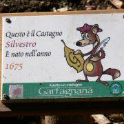 etichetta castagno cerasa